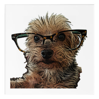 Yorkshire Terrier with Glasses Acrylic Print