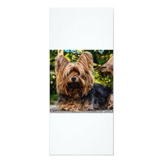 Yorkshire Terrier Yorkie Card