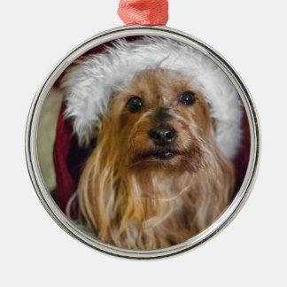 Yorkshire (yorkie) / Silky Terrier Ornament