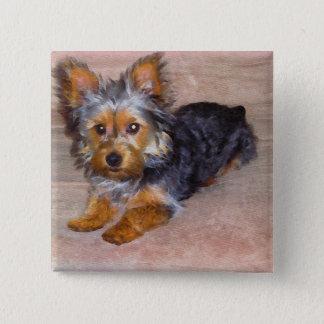 Yorkshire (yorkie) / Silky Terrier Puppy Button