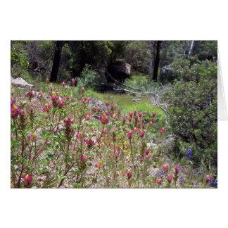 Yosemite in Springtime:  Harlequin Lupine Card