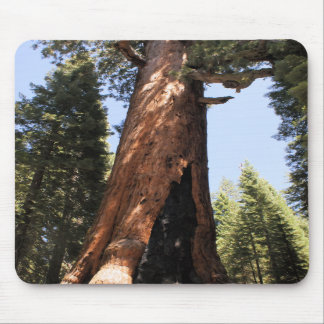 Yosemite National Park sequoia photo mousepad