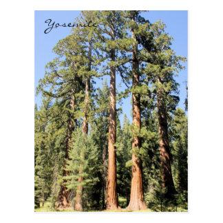 Yosemite National Park Sequoia tree Photo Postcard