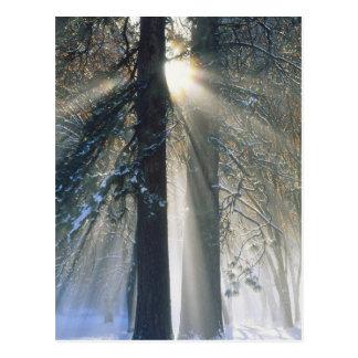 Yosemite National Park - Sun rays streaming Postcard