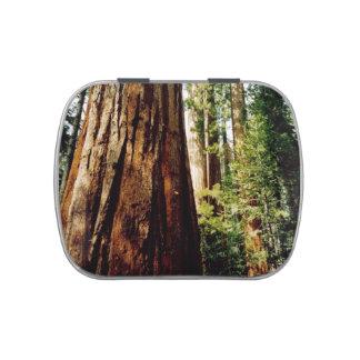 Yosemite Redwoods