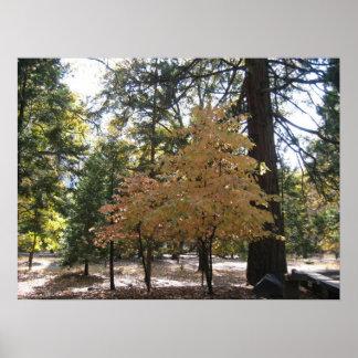 Yosemite Trees Posters