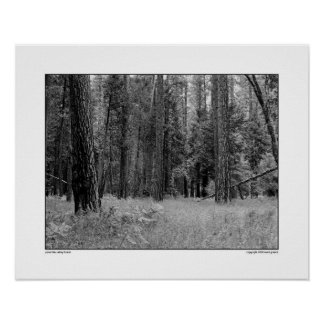 Yosemite Valley Forest Poster