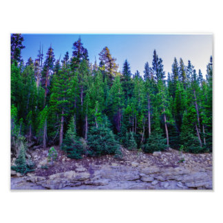 Yosemite Valley Forest & Sky Photo Print