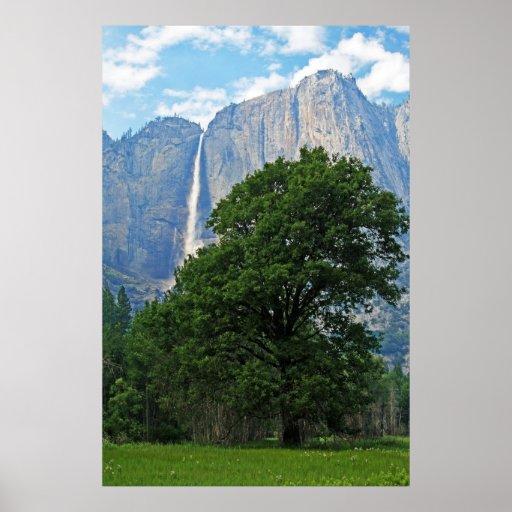 Yosemite Waterfall and Tree Print