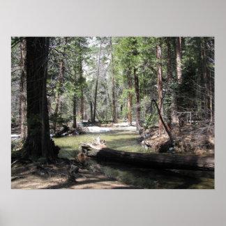 Yosemite Woods Poster