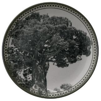 Yosemite's Gift Porcelain Plate