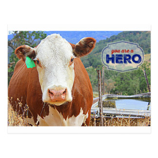 You are a Hero! Cow Postcard