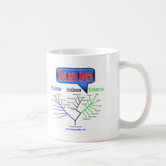 """You Are Here"" Evolutionary Tree Coffee Mug"