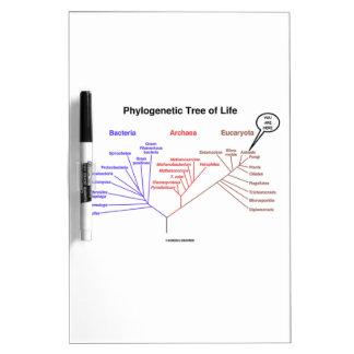 You Are Here Phylogenetic Tree Of Life (Biology) Dry Erase Board