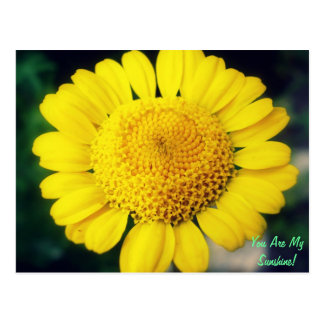 You Are My Sunshine! Postcard