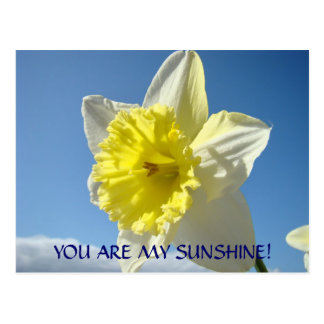 YOU ARE MY SUNSHINE! Postcards Daffodil Flowers