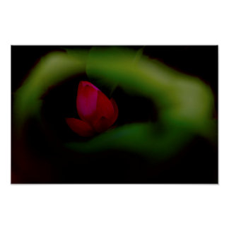 You-The Only | Lotus Fairyland Photographic Art -8 Poster