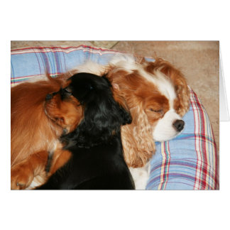 You Will Lick Cancer Cavalier King Charles Spaniel Card