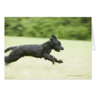 Young (5 months) black Briard (Berger de Brie), Greeting Card