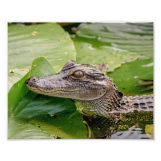 Young Alligator Art Photo