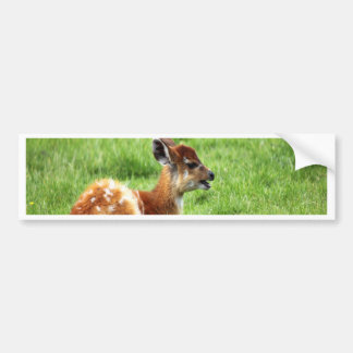 young antelope waiting for mom and love bumper sticker