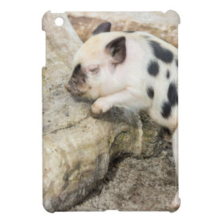Young black and white piglet at tree trunk case for the iPad mini