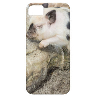 Young black and white piglet at tree trunk case for the iPhone 5