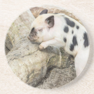 Young black and white piglet at tree trunk coaster