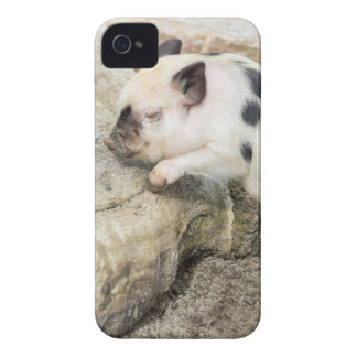 Young black and white piglet at tree trunk iPhone 4 cover