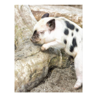 Young black and white piglet at tree trunk letterhead template