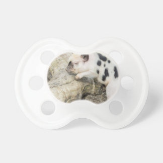 Young black and white piglet at tree trunk pacifier