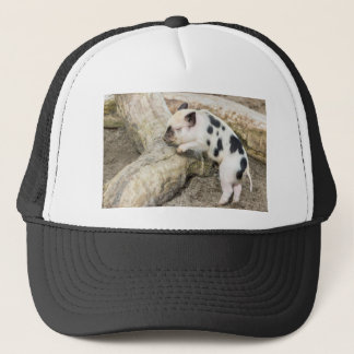 Young black and white piglet at tree trunk trucker hat