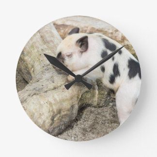 Young black and white piglet at tree trunk wall clocks