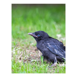 Young black crow sitting in green grass letterhead template