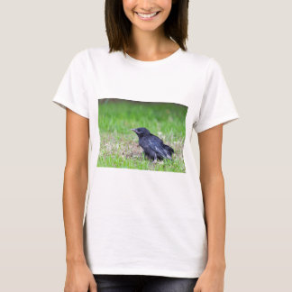 Young black crow sitting in green grass T-Shirt