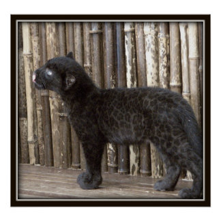 Young Black Leopard Poster