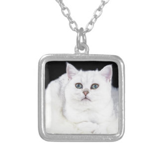 Young black silver shaded cat lying on white fur silver plated necklace
