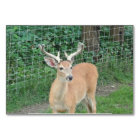 Young Buck Deer Card