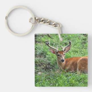 Young Buck Deer in Grass Double-Sided Square Acrylic Keychain