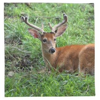 Young Buck Deer in Grass Napkins
