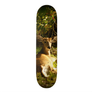 Young Buck in the Meadow Skateboard