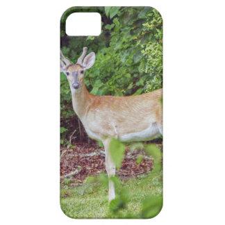 Young Buck in Velvet iPhone 5 Case