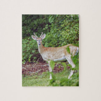 Young Buck in Velvet Jigsaw Puzzle