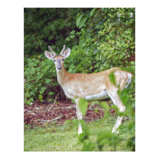 Young Buck in Velvet Letterhead