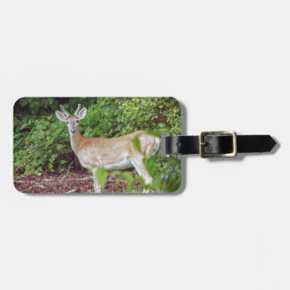 Young Buck in Velvet Luggage Tag