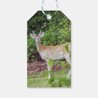 Young Buck in Velvet Pack Of Gift Tags