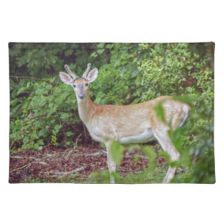 Young Buck in Velvet Placemat