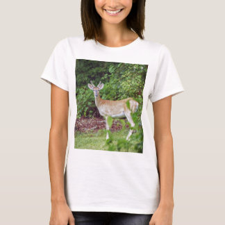 Young Buck in Velvet T-Shirt