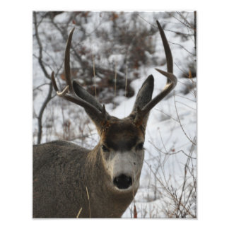 Young Buck Photo Print