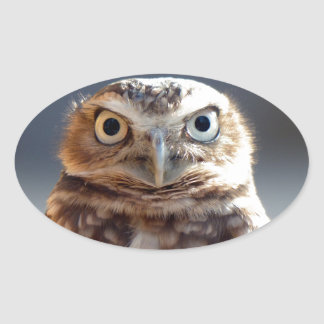 Young Burrowing Owl Oval Sticker